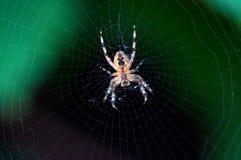 Radiografisch von einer Spinne Stockfotos