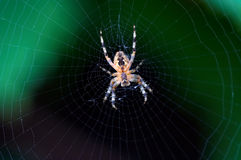 Radiographic of a spider. Detail (close-up) of a spider stock photos