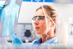 Radiographie de examen de jeune scientifique féminin attirant au sujet de photos stock