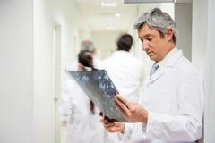 Radiologe-Reviewing-Röntgenstrahl Lizenzfreies Stockbild
