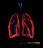 Radiologiczni przejrzyści płuca, medyczny pojęcie ilustracja 3 d Zdjęcia Stock