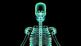 radiologiczny obraz cyfrowy Ludzka Zredukowana animacja (HD) royalty ilustracja