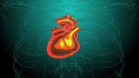 Radiologiczny serce w akci Loopable Hd wideo ilustracji
