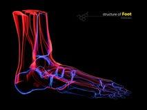 Radiologiczny wizerunek ludzka stopa, 3d ilustracja Obraz Royalty Free