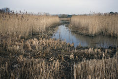 Radipole lake, RSPB Reserve Stock Image