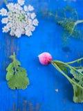 Radis, aneth, feuille et fleur sur le conseil bleu Image stock