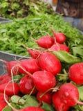 Radis au marché de l'agriculteur Image stock