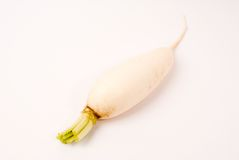 Radis blanc Photo stock