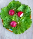 Radis de jardin sur la laitue de feuilles Photo stock
