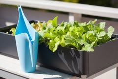 Radis et salade croissants dans le récipient sur le balcon le Gard végétal Photographie stock libre de droits