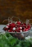 radis frais de groupe Photographie stock libre de droits