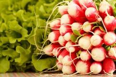 Radis frais et salade de grand groupe Images stock