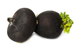 Radis noir Image stock
