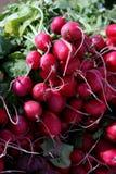Radis organique Photo stock