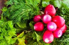 Radis, raccords en caoutchouc et betterave de jardin. photos stock