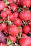 Radis rouge dans la forme de boule Photo libre de droits