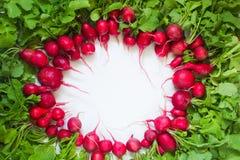Radis rouge frais sur le fond blanc Image stock