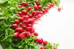 Radis rouge frais sur le fond blanc Images stock