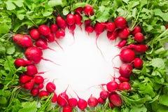 Radis rouge frais sur le fond blanc Images libres de droits