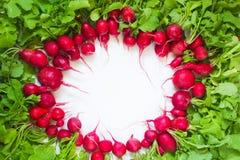 Radis rouge frais sur le fond blanc Photos libres de droits