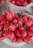 Radis rouges Photo stock