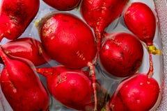 Radis rouges de radis écologiques - rabanitos de couleur rouge intense photos libres de droits