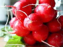 Radish. Freshly washed - ready to be eaten Royalty Free Stock Images
