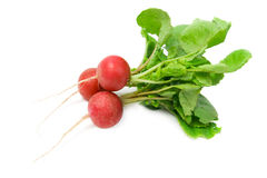 Radish. Royalty Free Stock Photo