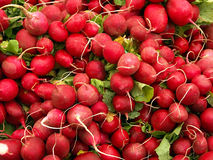 Radish. Bunch of radish royalty free stock images