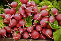 Radish. This picture is a representation of radish on a farm bench Royalty Free Stock Photo