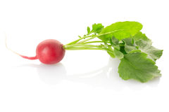 Radish fotos de stock royalty free