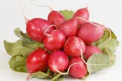 Radish. Bunch of radish; isolated and very close Royalty Free Stock Photos