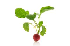 Radish. Fresh radish over white background Royalty Free Stock Images