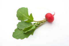 Radish. Of a white background Royalty Free Stock Photography