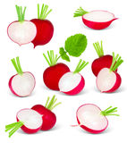 Radish foto de stock royalty free
