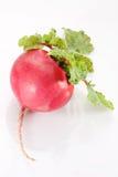Radish. Red radish with leaf on white background Royalty Free Stock Images