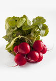 Radish. Fresh radish on the white background Stock Images