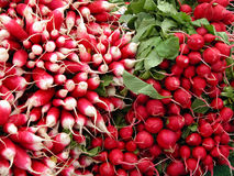 Radish. A very tasty radish aspect-useful natural texture Stock Photography