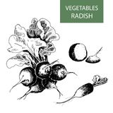 Radish Stock Photos