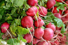 Radish Royalty Free Stock Images