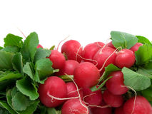 Radish Royalty Free Stock Photos