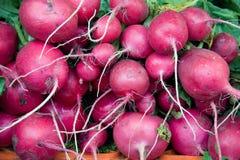 Radish. Heap of radish in a market counter Stock Photo