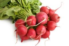 Radish. Fresh radish isolated on white background Stock Photos