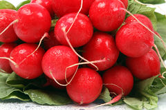 Radish background Royalty Free Stock Photos
