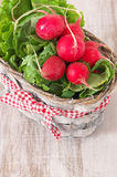 Radish in basket royalty free stock photography