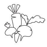 Radish and beet in style monoline. Vector illustration Stock Photo