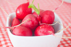 Radish in bowl. On checkered fabric Stock Images