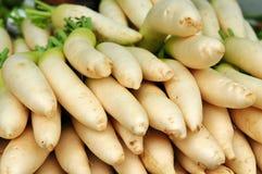 Radish branco no mercado Imagens de Stock Royalty Free