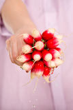 Radish bunch in female hand Royalty Free Stock Images