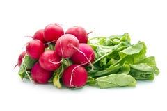 Radish. Bunch of organic radish isolated on white background Stock Image